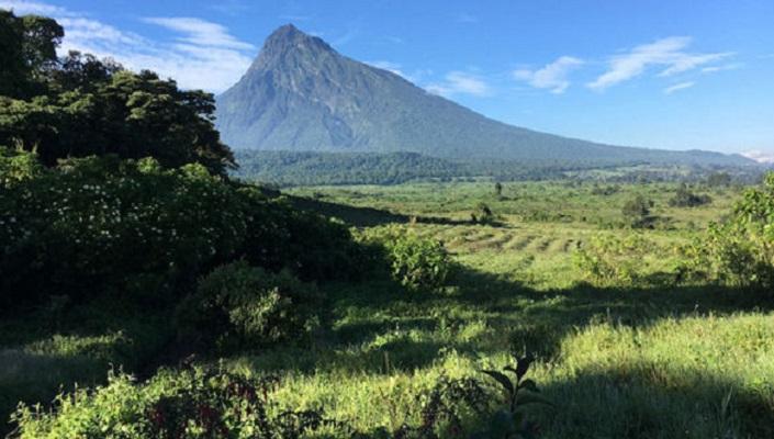 Environnement : Les militants pour le climat opposés à l'exploitation du pétrole et lancent un appel pour un « Virunga Zéro Fossile »