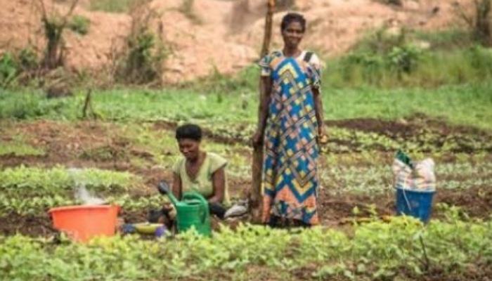 29% des Congolais souffrent de l'insécurité alimentaire